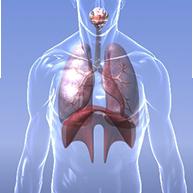 Prise en charge pharmaceutique du patient asthmatique
